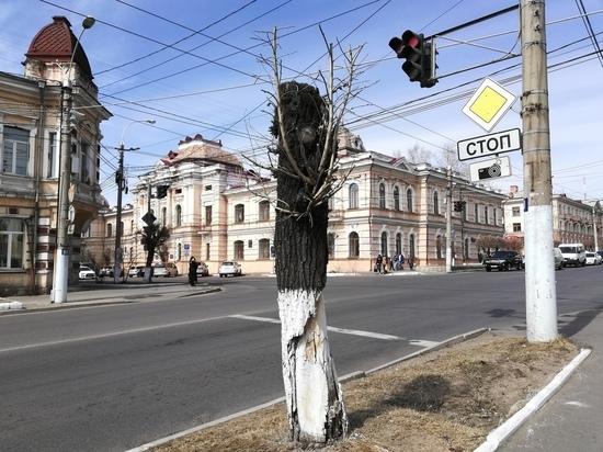 Зеленая промилле: исчезновение деревьев в Чите глазами урбаниста