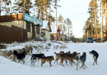 Зоозащитница в Улан-Удэ: «Исчезнут собаки – появятся крысы»