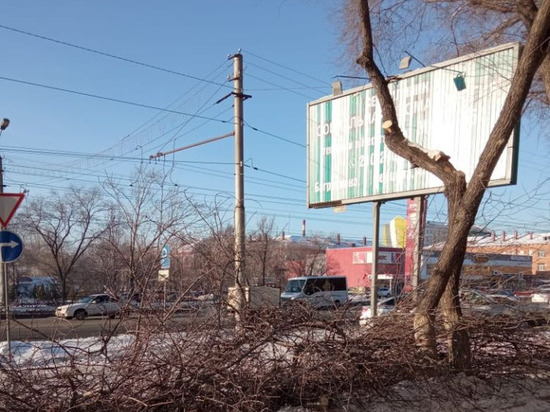 Чиновники мэрии Омска объяснили скандал со сносом вязов под видом тополей