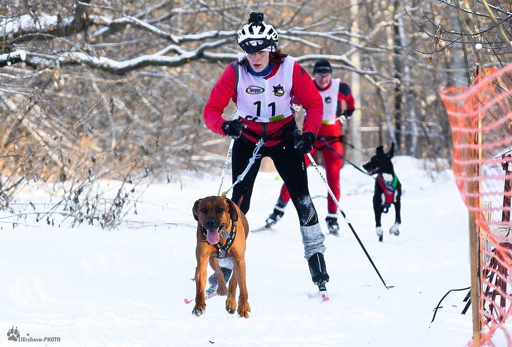 50 лучших фото с зимних гонок в собачьих упряжках под Рязанью