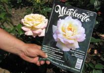 Агроном-плодоовощевод из Тулы Людмила Калинина, обладающая 42-летним стажем, рассказала «МК в Туле», какие сорта роз наиболее устойчивы в Центральной России