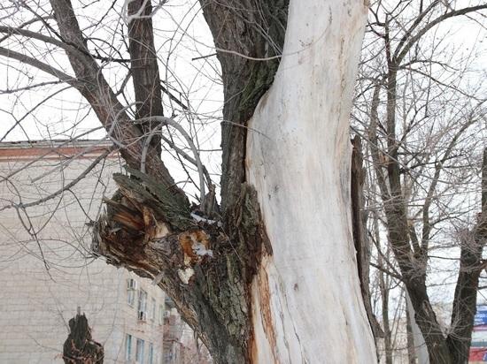В Волгограде приведут в порядок бульварную зону проспекта Жукова