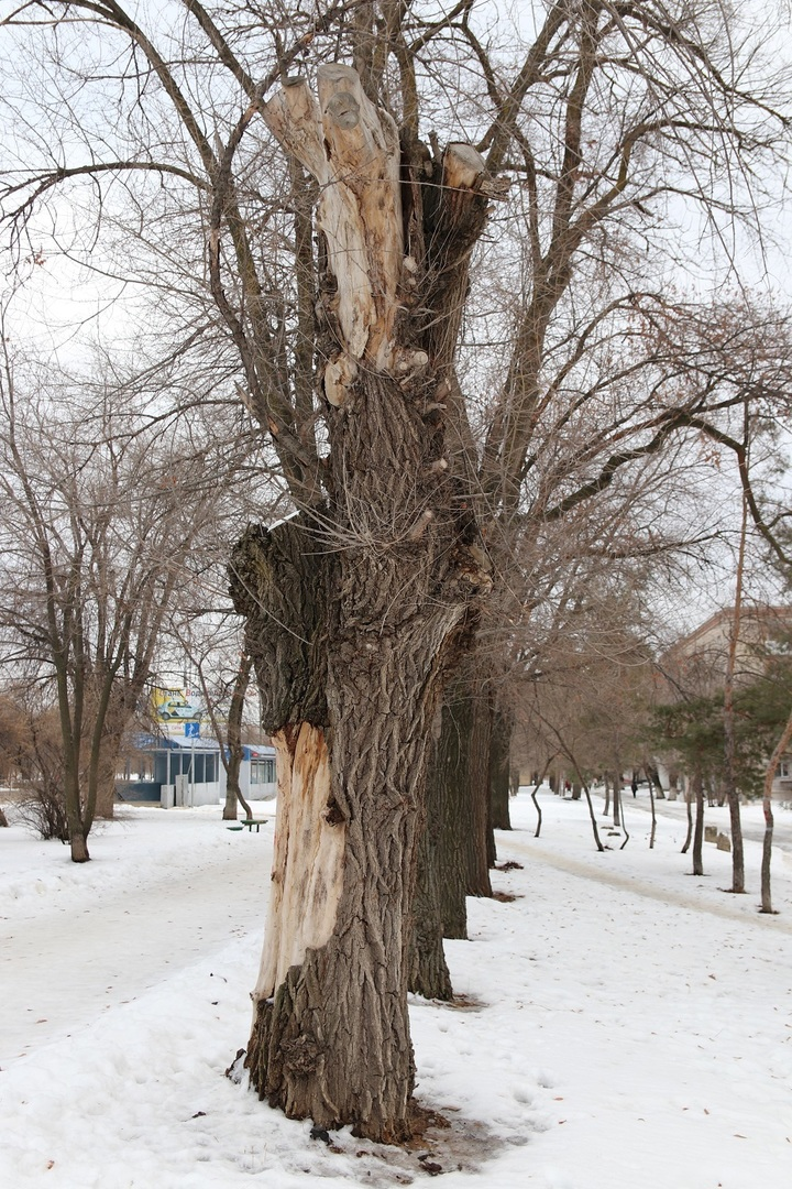 Бульварную зону проспекта Жукова в Волгограде приведут в порядок , фото-2