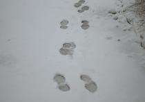 Погода в Рязанской области 4 февраля: тепло и снег