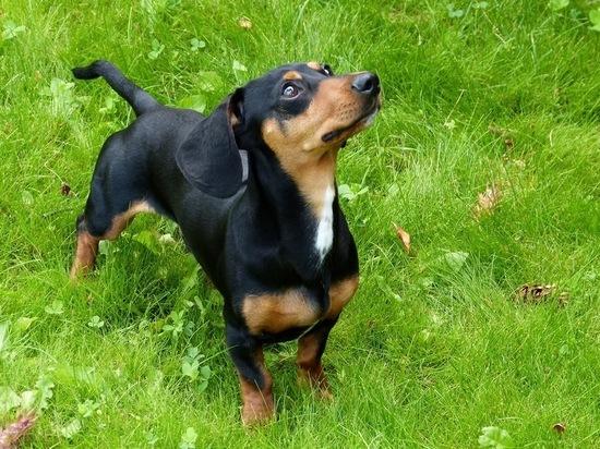 Названы наименее аллергенные породы собак
