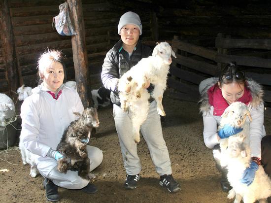 При всех усилиях, которые сделаны для того, чтобы развивать в Туве промышленность, овцеводство остается основой экономики вверенной ему территории
