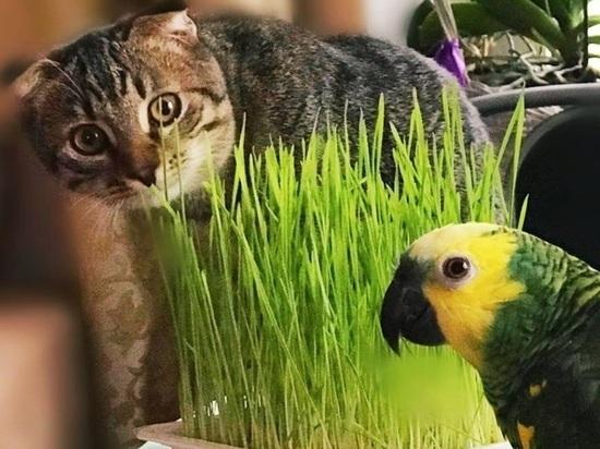 Попугай и кошка могут пополнить ряды петербургских бездомных