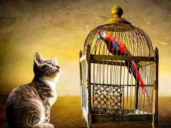 В Петербурге кошку и попугая пытаются выселить из квартиры через суд