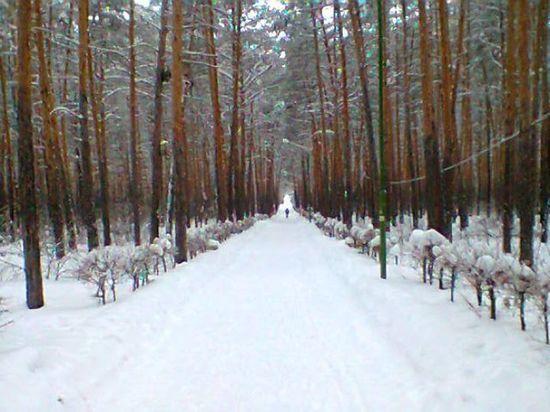 Метеорологи дали прогноз о похолодании  в Омске с воскресенья