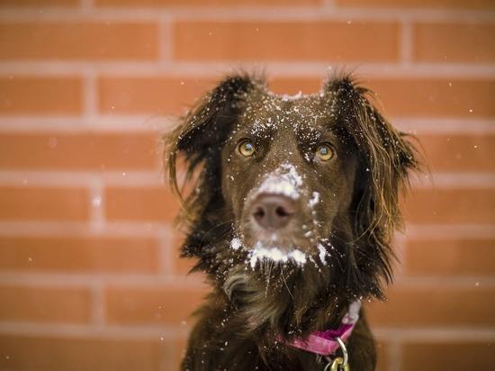 В Приморье спасли собаку, застрявшую между трубами на теплотрассе