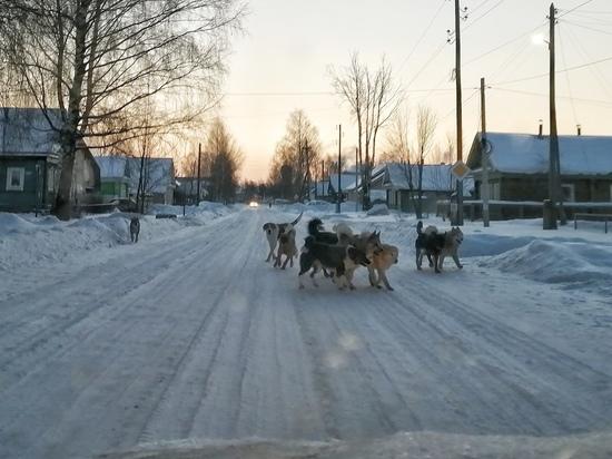 В городе Тверской области из-за стаи домашних собак люди заряжают электрошокеры