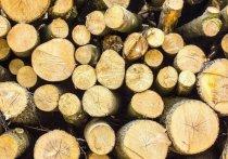 Лесная контрабанда: карельский лес незаконно «сплавляли» в Финляндию