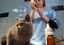 Воодушевившись своими достижениями в борьбе с SARS-CoV-2, Россия решила обогнать всех и в области ветеринарных вакцин от коронавируса