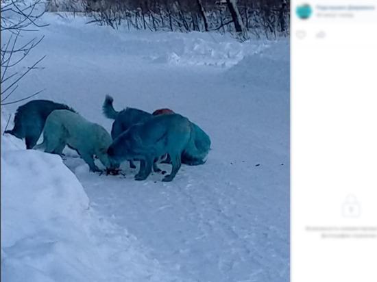 В Дзержинске собаки окрасились в голубой цвет