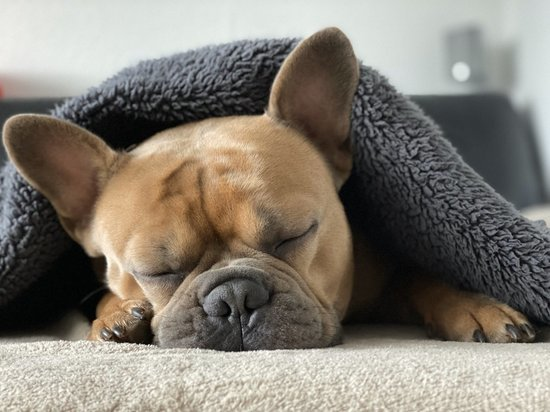 Почему собаки так любят спать с хозяином на кровати