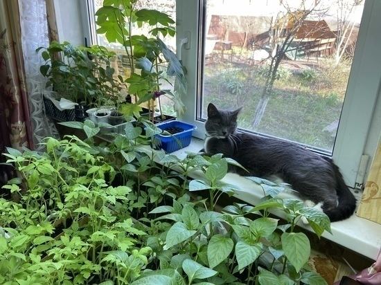 Агроном напоминает, что рассаду надо сеять не раньше марта