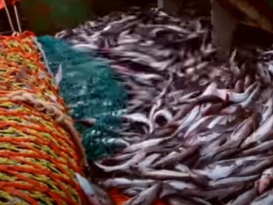 Поставки рыбы остановились из-за опасений обвала цен