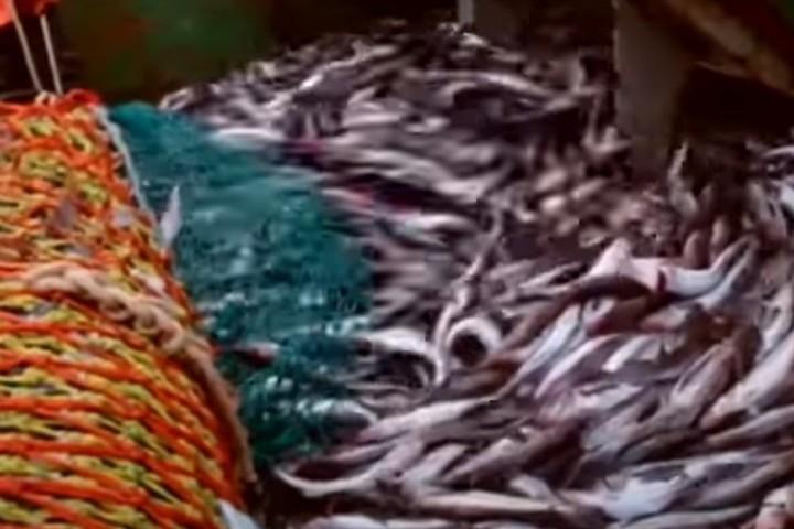 Поставки рыбы остановились из-за опасений обвала цен - Московский Комсомолец