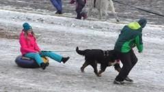 В Абакане состоятся собачьи бега