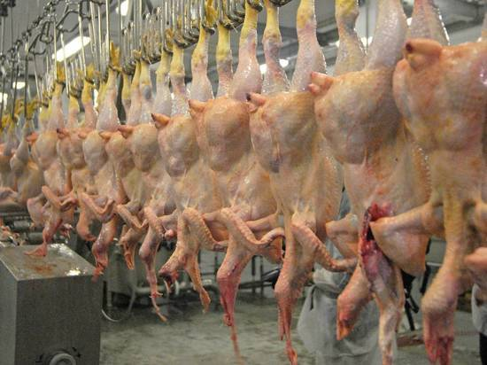 На калужской птицефабрике конвейер перемолол сотрудницу