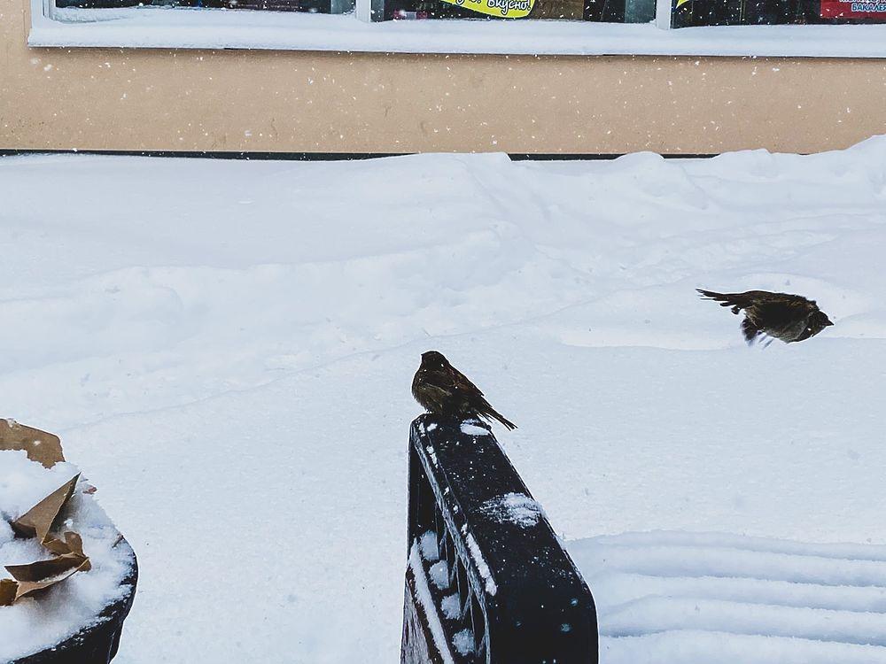 В Твери бушует стихия: дворы и дороги засыпает снегом