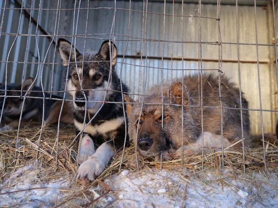 Дополнительный участок для содержания бездомных животных выделят в Новом Уренгое