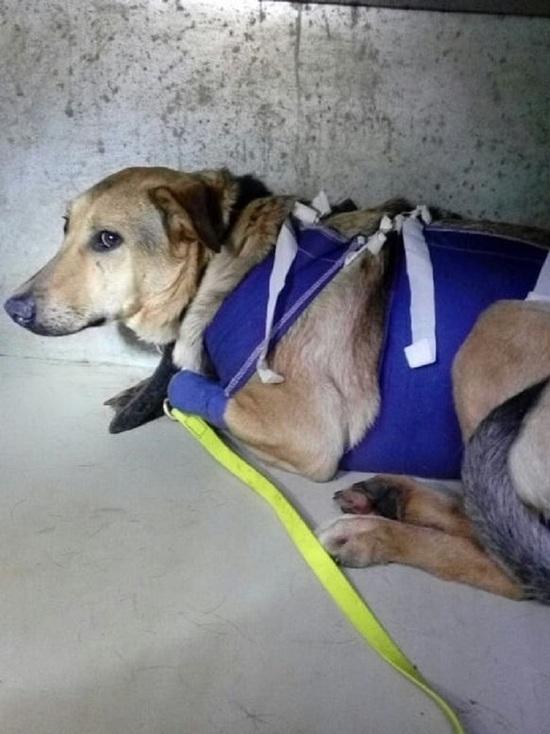В Твери умерла собака, отравленная догхантерами