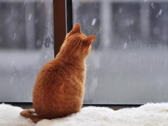 В Ростовской области ожидается морозная пасмурная погода