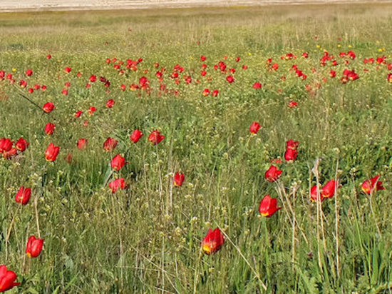 В Калмыкии туристы смогут ближе знакомиться с краснокнижными птицами