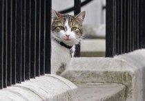 Мышелов британского правительства кот Ларри отмечает 10-летие на своем посту