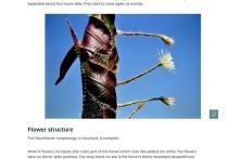 Эксперты в Кембридже не смыкают глаз, поскольку в Великобритании должен зацвести редчайший лунный цветок