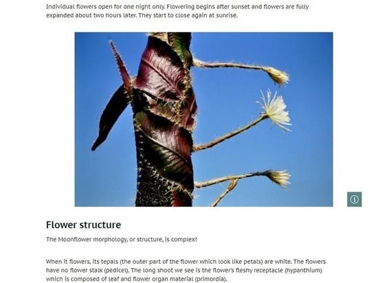 Ботаники замерли в ожидании цветения редчайшего водяного кактуса из бразильской сельвы
