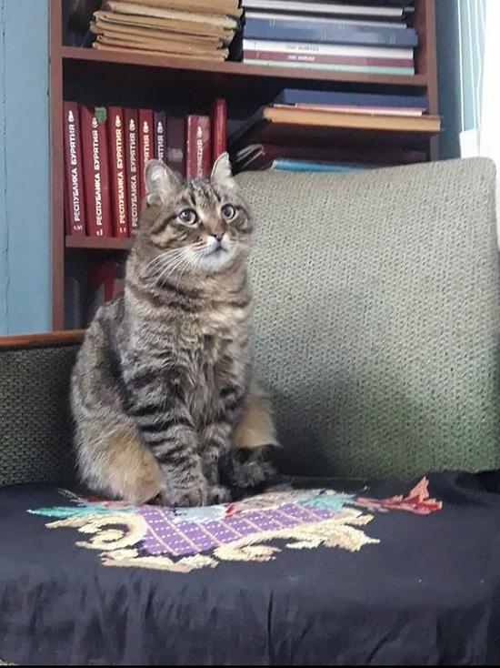Среди его подписчиков в Инстаграм белоснежный кот Ахилл из Эрмитажа в Питере
