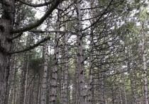 Аксенов потребовал убрать мусор в городских лесах Крыма