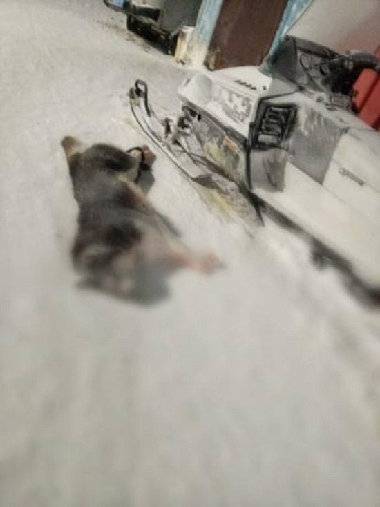 Агрессивная собака покусала 7 школьников в Сеяхе