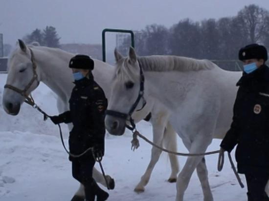 Нижегородские полицейские проводили на пенсию трех орловских рысаков