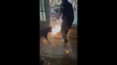 Затащивший в дом горящую петарду пес попал на видео