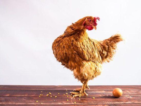 Будут ли жители Хакасии платить больше за яйца и курицу