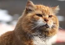 На Шпицбергене умер кот Кеша - достопримечательность острова и единственный здесь представитель своего рода