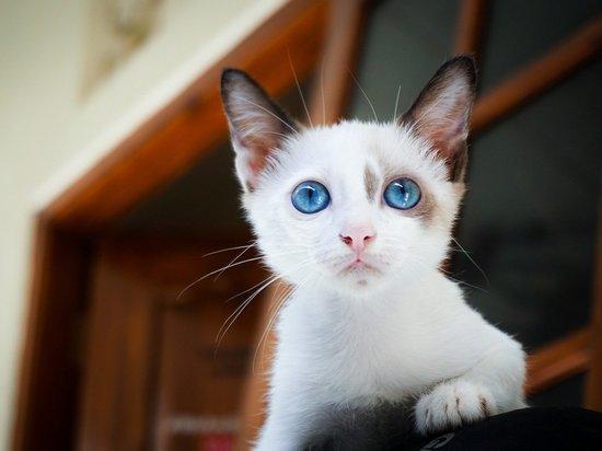 Немецкие ветеринары предупреждают об опасности контакта с кошками во время карантина