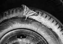 В Астраханской области в лобовом столкновении погиб водитель иномарки