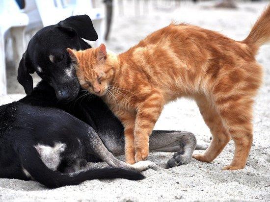 В Удмуртии разработают правила содержания домашних животных