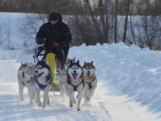 Завтра в Марий Эл пройдут гонки на собачьих упряжках