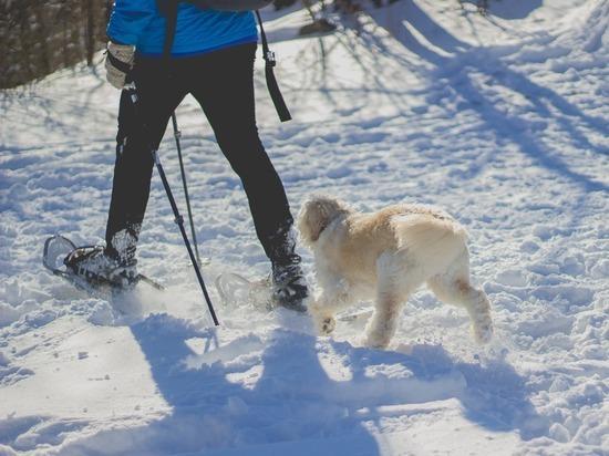 В Ижевске запретили выгуливать собак на детских площадках