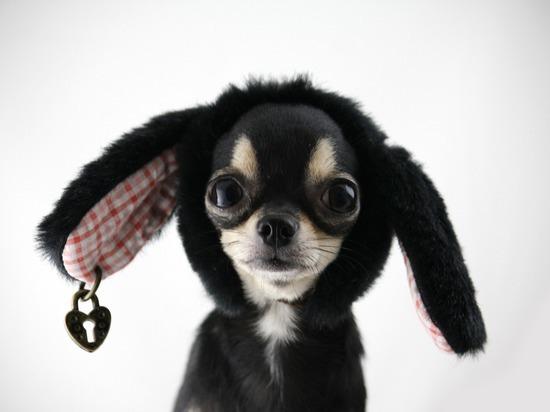 ТОП-10 популярных брендов, в честь которых россияне называют своих собак