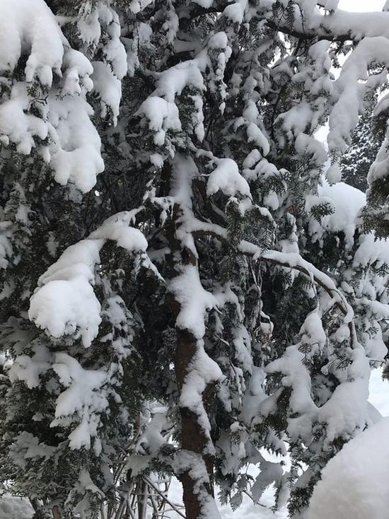 Снегопад в Крыму: режим ЧС ввели в четырех районах