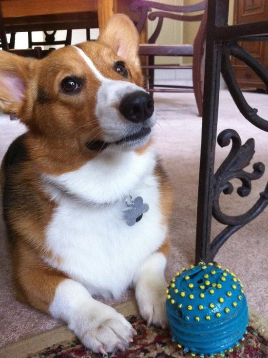 Собаки осознают границы своего тела и последствия своих действий