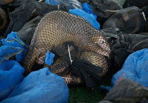 Шокирующие кадры, сделанные на рынке дикой природы в Нигерии, показывают, что в Лагосе в антисанитарных условиях продаются панголины, морские черепахи и обезьяны