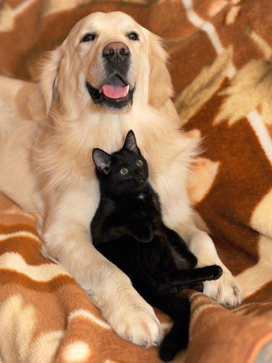 Жителям Удмуртии разрешат держать дома двух собак и одну кошку
