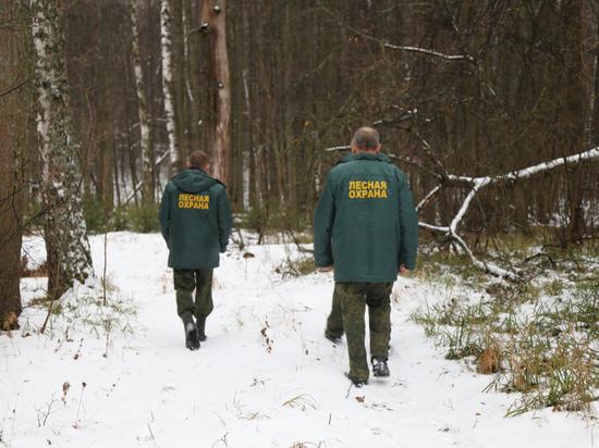 Калужан приглашают стать общественными лесными инспекторами
